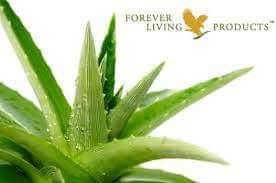 Aloe Vera - Schönheit von Innen und Außen